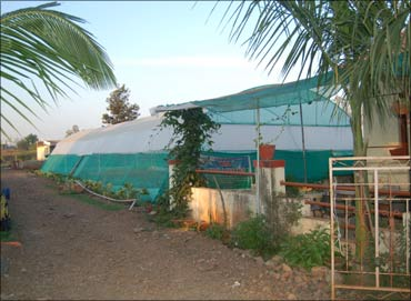 Dyaneshwar's greenhouse at his farm.
