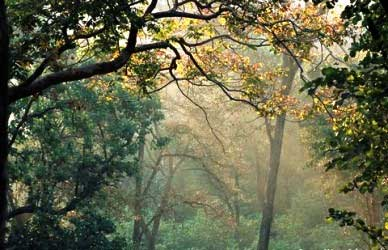Forests in Madhya Pradesh go hi tech