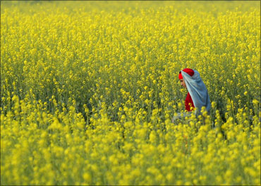 A farmer works in a field near Chandigarh in Haryana.