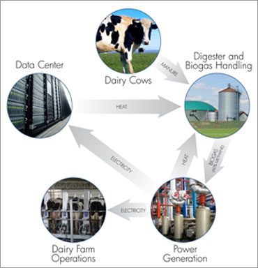 How 10,000 cows can power 1 MW data centre