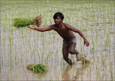 An agriculture labourer toils in a farm.
