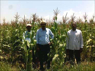 Karuturi in his maize farm in Ethiopia.