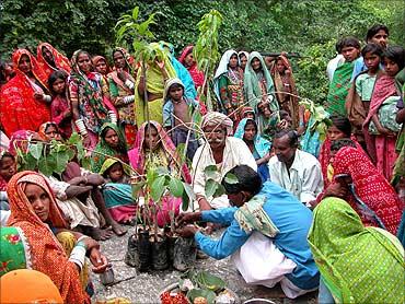 Tree planting initiative.