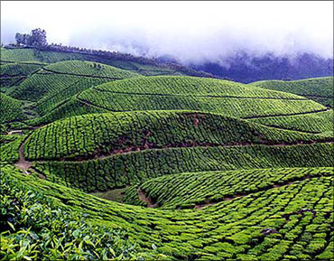 kerala, God's Own Country.