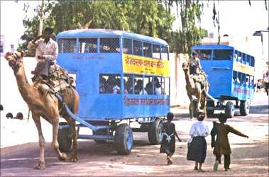 Camel bus.