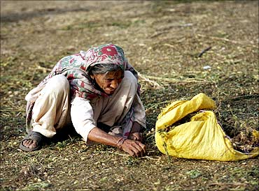 An elderly woman picks up the scraps from a vegetable market in Lahore.