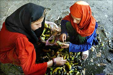 Girls scavenge bananas from garbage for food in a fruit market in Lahore.