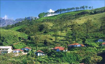 Tea garden in Munnar, Idukki.