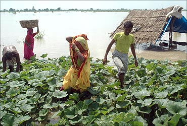 Farmers work on their flooded vegetable field at Tihera village near Agra.