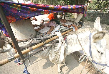 A child of a nomad from the desert Indian state of Rajasthan sleeps on a cot loaded over a donkey.