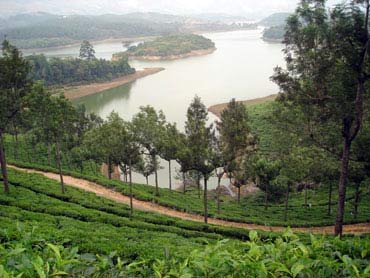 Heavenly Munnar in Kerala.