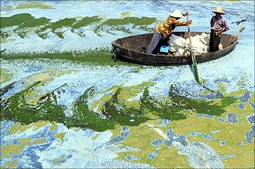 Fishermen row a boat in the algae-filled Chaohu Lake in Hefei.