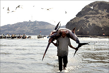 A fisherman carries a swordfish to the local fish market in Aden.
