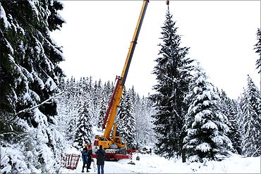 A Christmas tree is sawed down to be presented as a gift from Norway to London.
