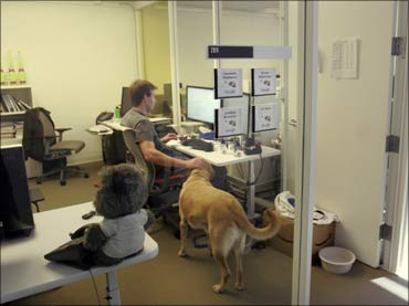 An employee with his dog in the Google office.