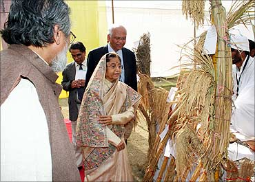 President Pratibha Patil looks at different high yielding varieties.