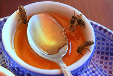 Beware! The honey sold in India is highly toxic