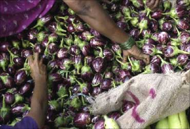 Customers purchase brinjals at a wholesale vegetable market in Mumbai.
