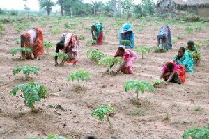 Rural women at work