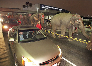 Ringling Bros and Barnum Bailey circus elephants during their walk to Staples Center in LA.