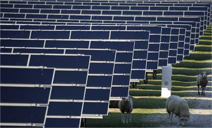 Sheep graze between the solar panels of a park in Waghaeusel, Germany.