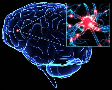 Neuroscientists want to map basic neuronal circuits.
