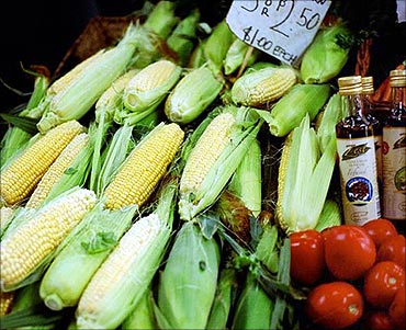 Price of corn has also doubled.