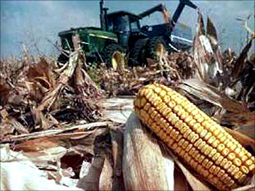 Ethanol subsidies in the US is putting pressure on corn.