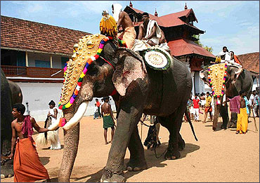 Elephants, caparisoned, during the Sree Poornathrayesa Temple festival.