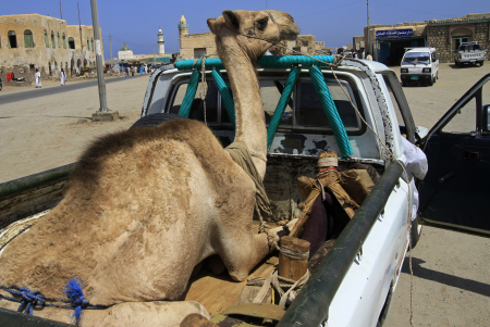 A camel sits on a truck in Suakin, Sudan.