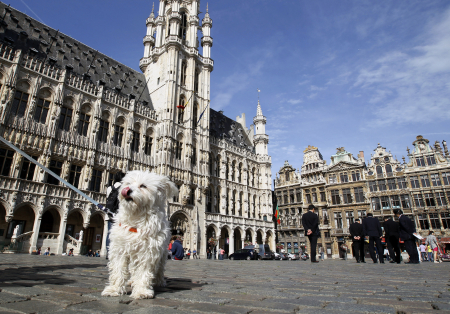 A dog stands on Brussels' Grand Place.