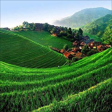 Green GDP.