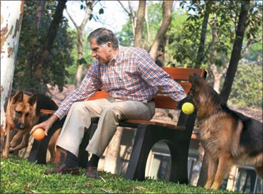 Ratan Tata with his pets.