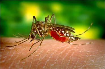 DRDO unleashes latest weapon: Mosquito repellent!