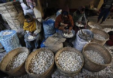 Vendors sort garlic at a wholesale vegetable market