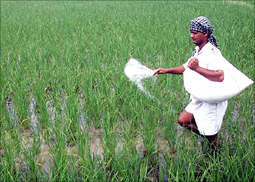 Partial decontrol of fertiliser has fizzled