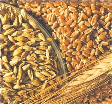 Wheat prices fall.