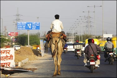 A man rides a camel on one of the main roads in New Delhi.