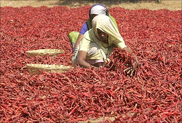 Workers spread red chilli peppers to dry in Shertha village on the outskirts of Ahmedabad.