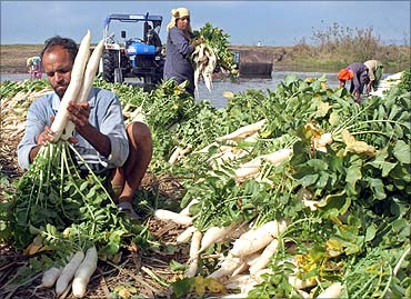 A farmer arranges radish at a vegetable market.