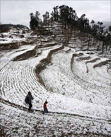 A farmer inspects a snow covered cauliflower field with his child near Kufri.