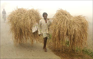 A farmer carries bundles of straw amid dense fog on the outskirts of Agartala, capital of Tripura.