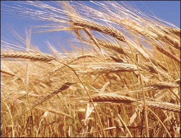 Wheat production to fall.