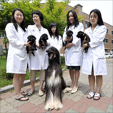 Snuppy (C), the world's first dog cloned from adult cells, 4 cloned puppies.