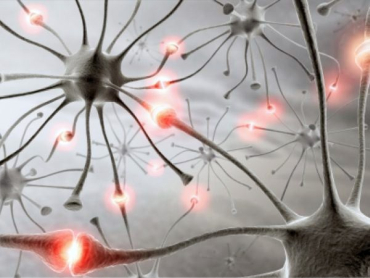 Researchers can explore activity patterns of many neurons.