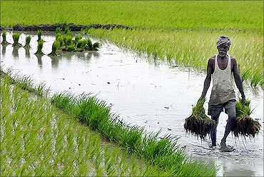 Agriculture: What others must learn from Gujarat!