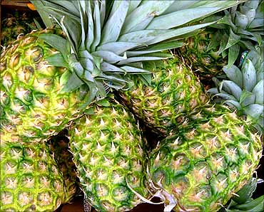 Co cultivates 25,000 tonne of pineapple per year.