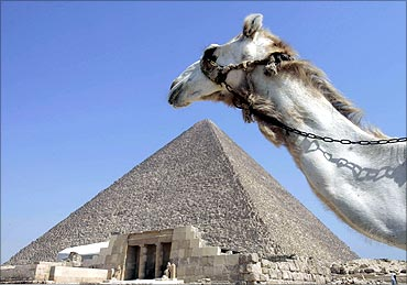 A camel passes in front of the Pyramids at Giza.