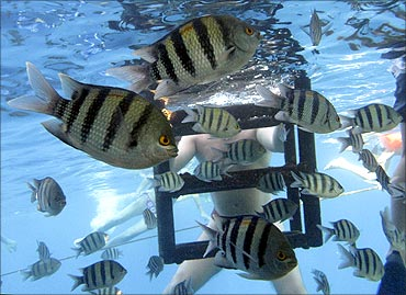 Tourists swim with fish in the Red Sea resort of Sharm El-Sheikh.
