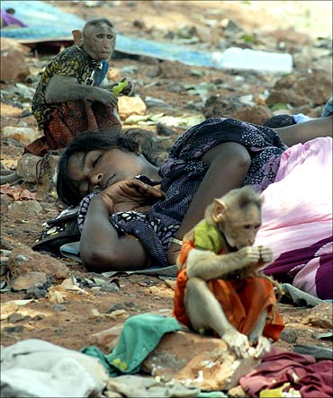 A homeless woman takes a nap next to her monkeys in Chennai.